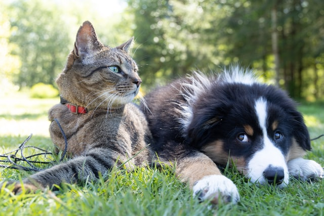 A cat and a dog laying down together.