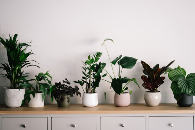 Houseplants on a piece of furniture.