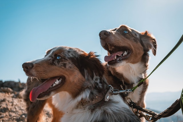 Two dogs that are happy.