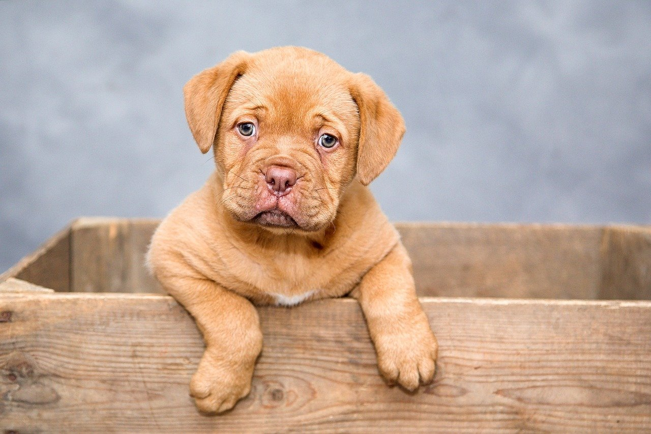 12 Signs of Skin Issues In Dogs