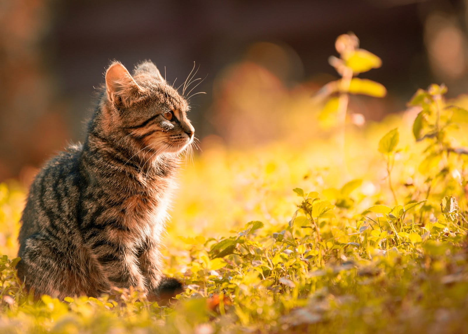 CBD For Anxious Cats, Pros & Cons
