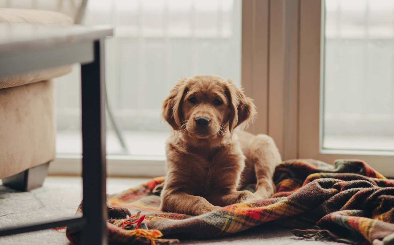 Dog Anxiety: Symptoms, Causes, Prevention, and Treatment