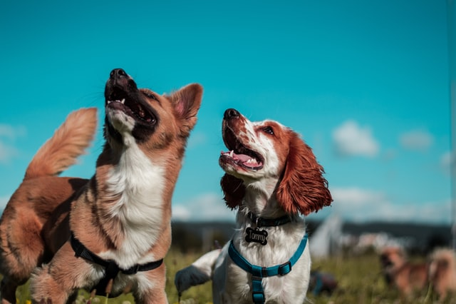 Two dogs that are very happy.
