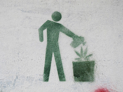 Figure watering a cannabis plant.