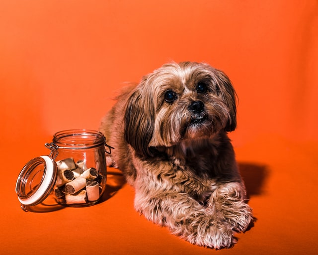 A dog laying next to a jar of treats.